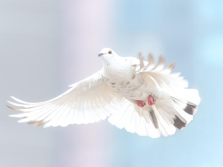 Slika: Misli ob obletnici osvoboditve Avstrije